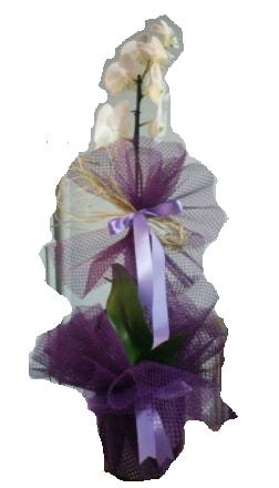 Tek dallı beyaz orkide süper kalite ithal  Mardin çiçek siparişi sitesi