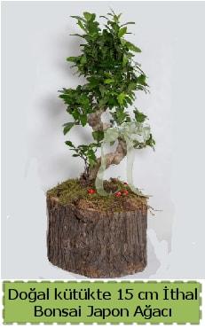 Doğal kütükte İthal bonsai japon ağacı  Mardin çiçek gönderme