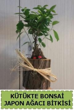 Kütük içerisinde doğal bonsai ağacı  Mardin çiçekçi telefonları