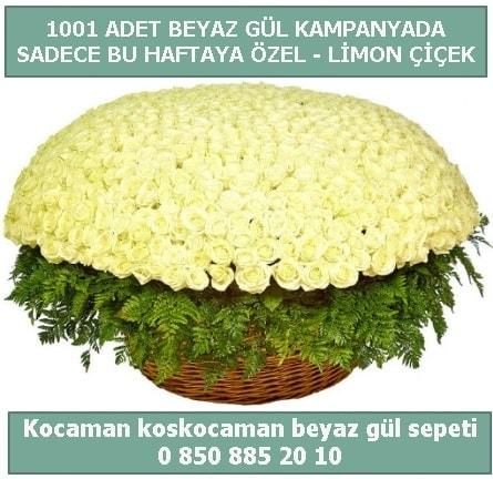 1001 adet beyaz gül sepeti özel kampanyada  Mardin çiçek gönderme sitemiz güvenlidir