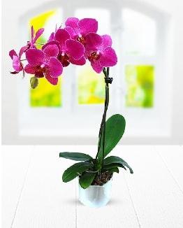 Tek dallı mor orkide  Mardin çiçek satışı