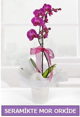 Seramik içerisinde birinci kalite tek dallı mor orkide  Mardin İnternetten çiçek siparişi