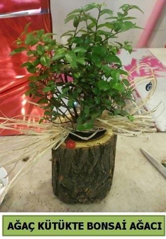 Doğal ağaç kütük içerisinde bonsai ağacı  Mardin çiçek gönderme sitemiz güvenlidir