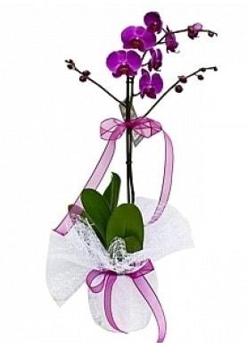 Tekli Mor Orkide  Mardin çiçek yolla