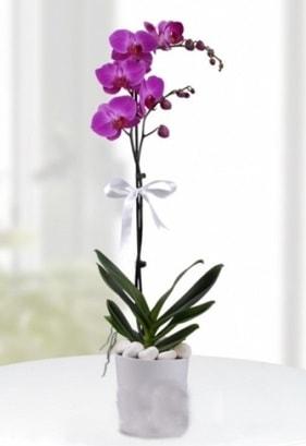 Tek dallı saksıda mor orkide çiçeği  Mardin çiçekçiler