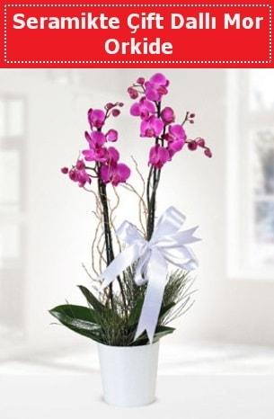 Seramikte Çift Dallı Mor Orkide  Mardin anneler günü çiçek yolla