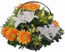 Mardin online çiçekçi , çiçek siparişi  sepet modeli Gerbera kazablanka sepet